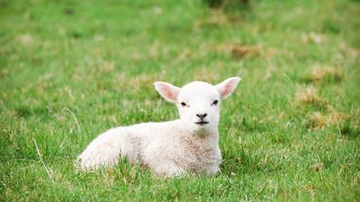 16x9(The Passover focus)