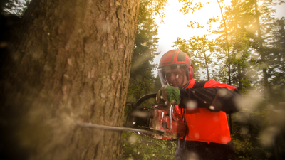 Man wearing protective workwear and cutting tree by using chainsaw in forest.