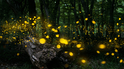 Night in the forest with fireflies