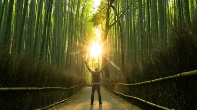 Rejoicing in a stunning natural bamboo forest at sunrise. Stock image with the cocepts of success, winning, joy, nature, environment, spirituality and religion.
