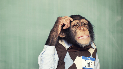 Chimp Think
