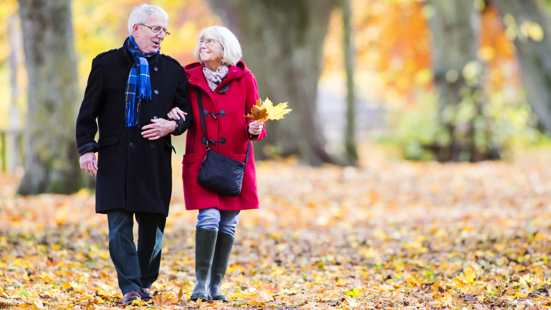 Senior couple are walking together through the autumn woods. The woman is arm in arm with her husband and is carrying leaves.
